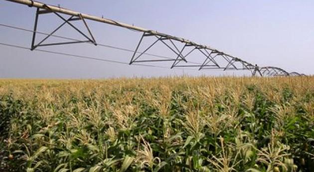 stock-footage-irrigation-of-sweet-corn-field